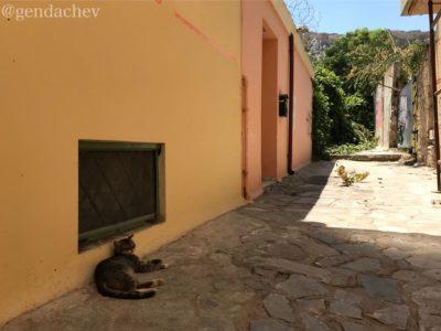 ギリシャ 猫